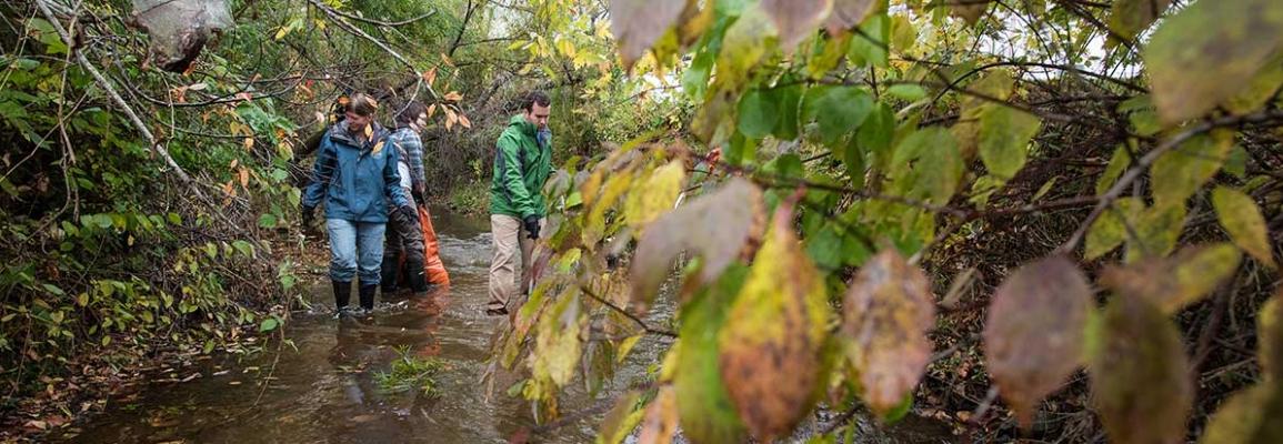 Boone Creek Cleanup