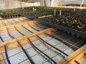 Springhouse Farm greenhouse