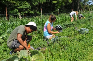 Students work on the farm